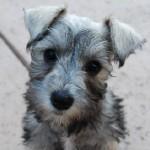 past-puppy-07