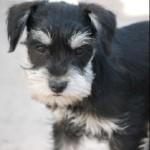 past-puppy-11
