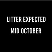 Announcement - Litter Expected In October