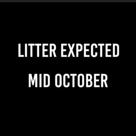 Litter Expected – October
